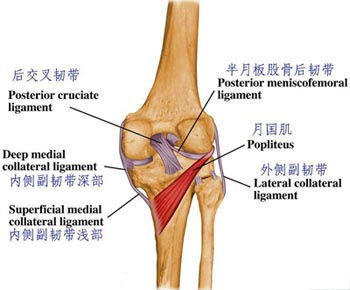 definition of injury of collateral ligament of knee joint